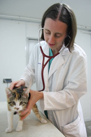 Shelter Medicine Program